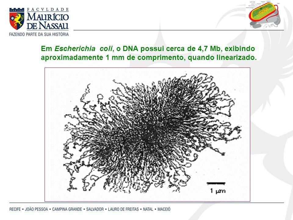 Em Escherichia coli, o DNA possui cerca de 4,7 Mb, exibindo aproximadamente 1 mm de comprimento, quando linearizado.