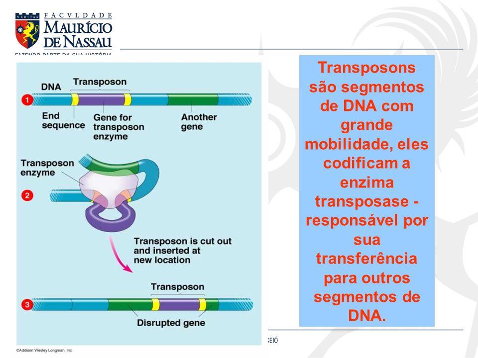 Transposons são segmentos de DNA com grande mobilidade, eles codificam a enzima transposase - responsável por sua transferência para outros segmentos