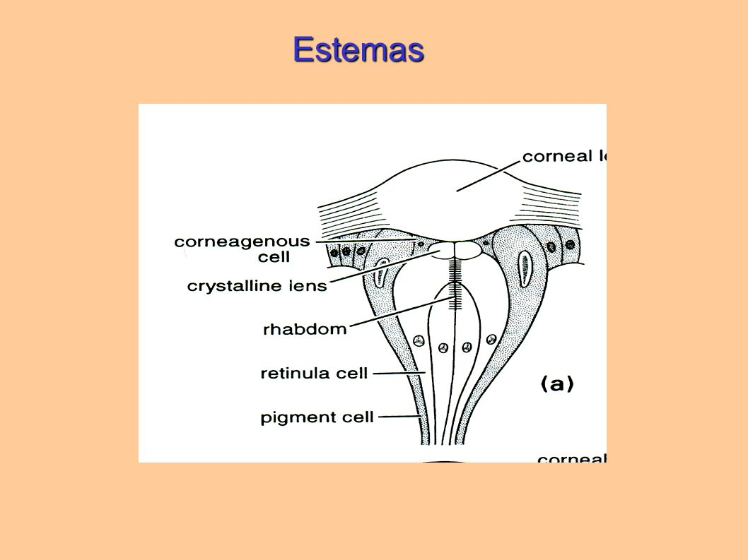 Estemas
