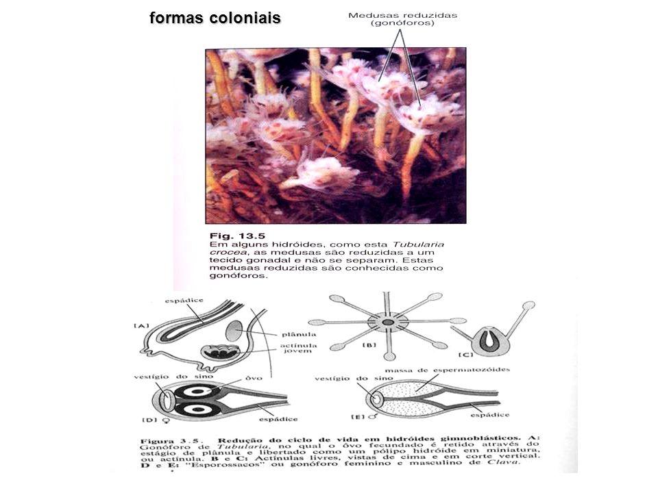 formas coloniais
