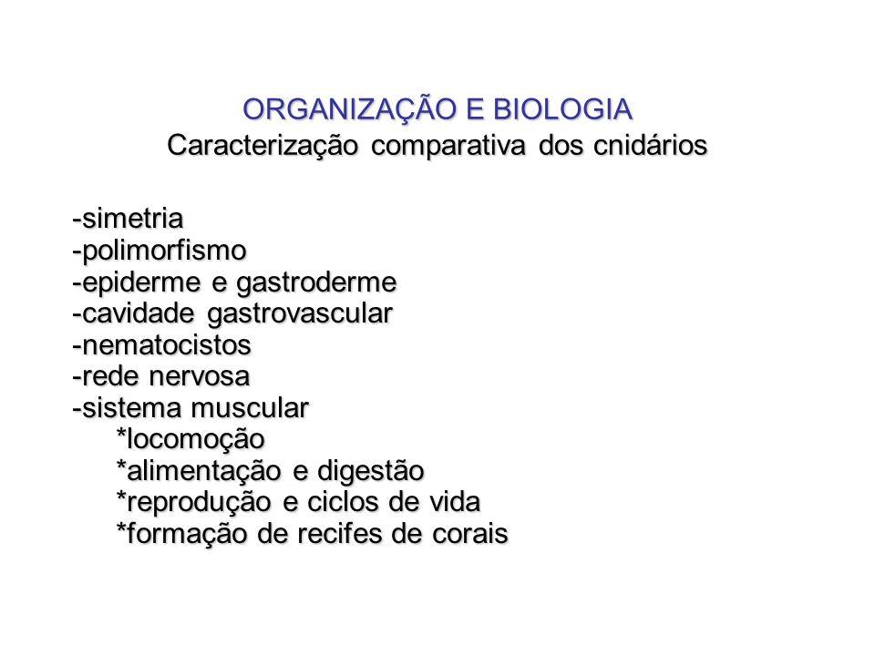ORGANIZAÇÃO E BIOLOGIA Caracterização comparativa dos cnidários -simetria-polimorfismo -epiderme e gastroderme -cavidade gastrovascular -nematocistos