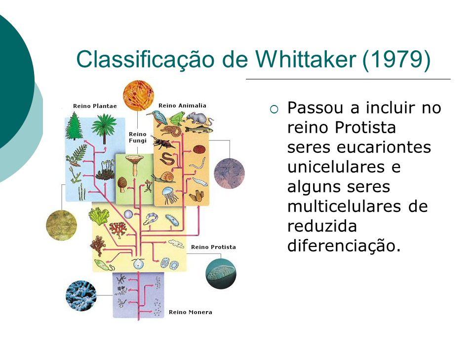 Classificação de Whittaker (1979) Passou a incluir no reino Protista seres eucariontes unicelulares e alguns seres multicelulares de reduzida diferenciação.