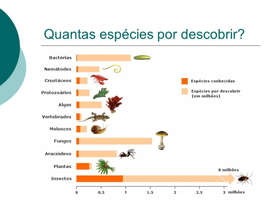 Quantas espécies por descobrir?