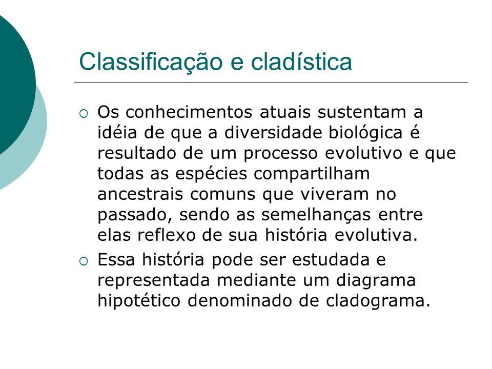 Classificação e cladística Os conhecimentos atuais sustentam a idéia de que a diversidade biológica é resultado de um processo evolutivo e que todas as espécies compartilham ancestrais comuns que viveram no passado, sendo as semelhanças entre elas reflexo de sua história evolutiva.