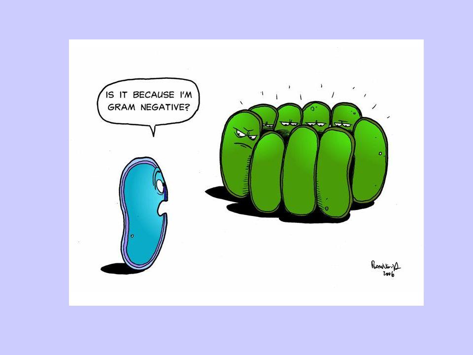 NUTRIÇÃO Maioria, heterótrofas: - Decompositoras; - Parasitas (Doenças) Minoria Autótrofa: - Fotossintetizante; - FOTOSSÍNTESE BACTERIANA QUIMIOSSINTETIZANTE Bactérias nitrificantes e desnitrificantes (ciclo do nitrogênio).