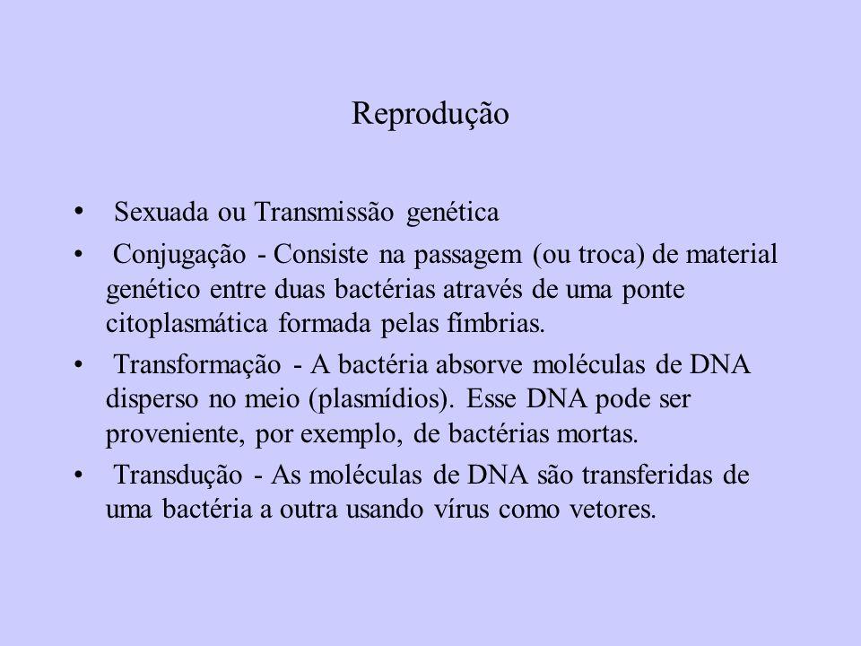 Reprodução Sexuada ou Transmissão genética Conjugação - Consiste na passagem (ou troca) de material genético entre duas bactérias através de uma ponte citoplasmática formada pelas fímbrias.