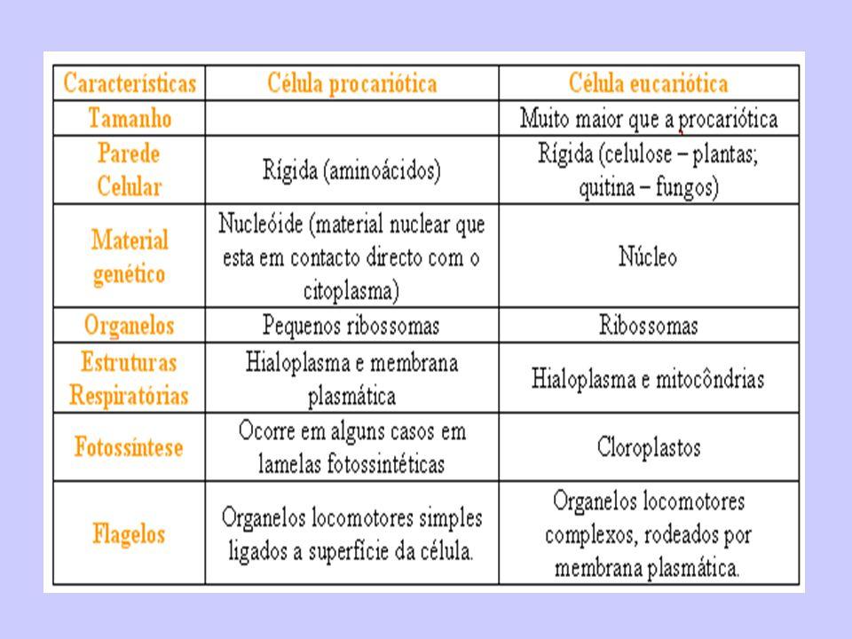 DOENÇASAGENTE CAUSADORMODO DE TRANSMISSÃOPARTICULARIDADES BOTULISMO Clostridium botulinum Ingestão de alimento na qual houve desenvolvimento da bactéria com liberação de toxinas,geralmente enlatados.