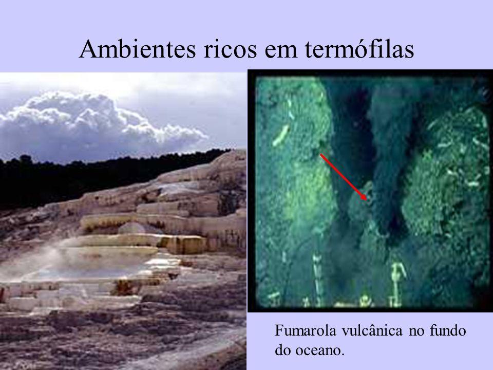 Ambientes ricos em termófilas Fumarola vulcânica no fundo do oceano.