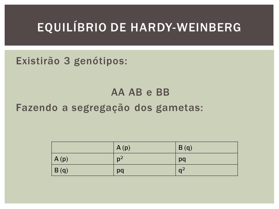 Existirão 3 genótipos: AA AB e BB Fazendo a segregação dos gametas: EQUILÍBRIO DE HARDY-WEINBERG A (p)B (q) A (p)p2p2 pq B (q)pqq2q2
