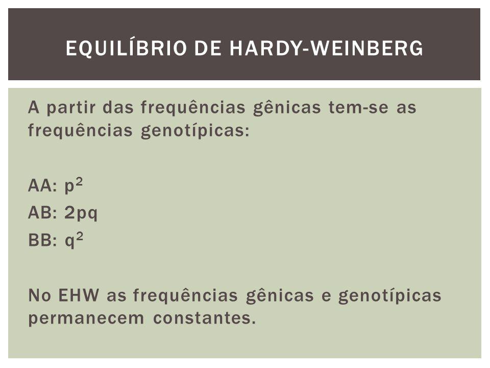 A partir das frequências gênicas tem-se as frequências genotípicas: AA: p 2 AB: 2pq BB: q 2 No EHW as frequências gênicas e genotípicas permanecem con