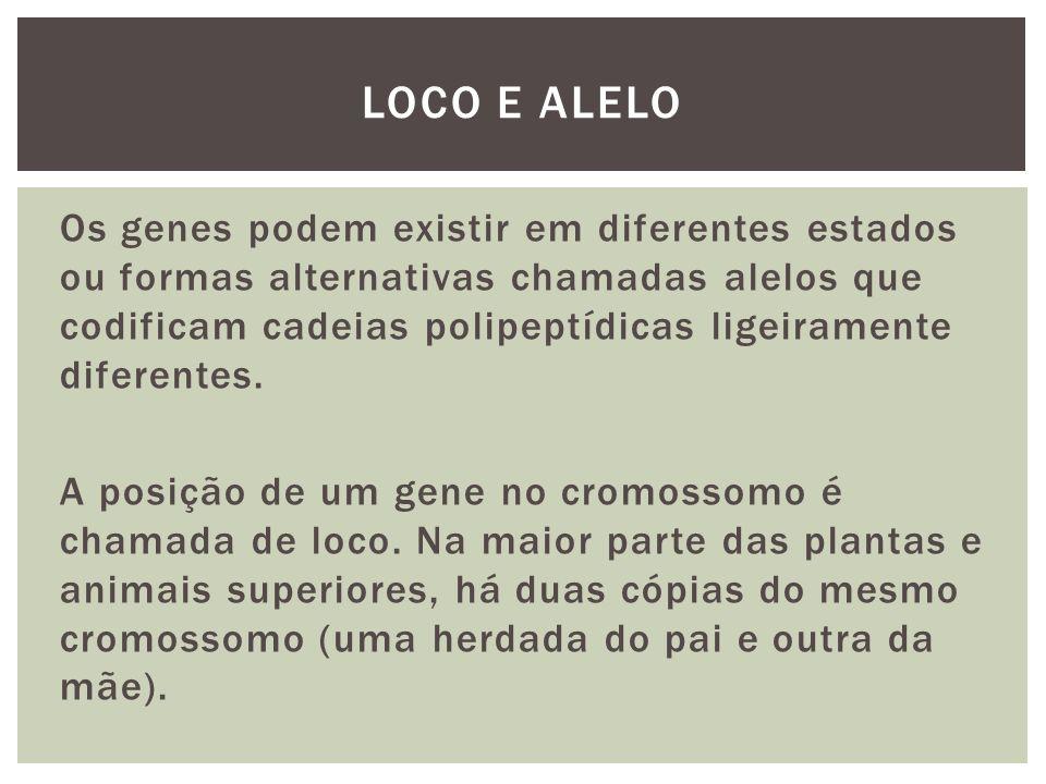 Os genes podem existir em diferentes estados ou formas alternativas chamadas alelos que codificam cadeias polipeptídicas ligeiramente diferentes. A po