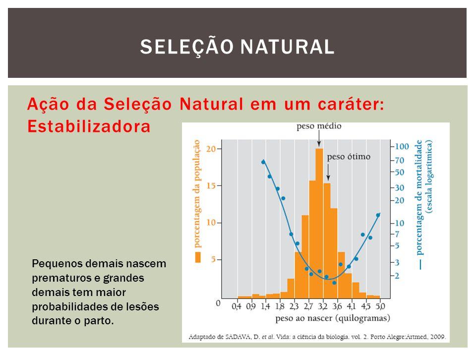 Ação da Seleção Natural em um caráter: Estabilizadora SELEÇÃO NATURAL Pequenos demais nascem prematuros e grandes demais tem maior probabilidades de l