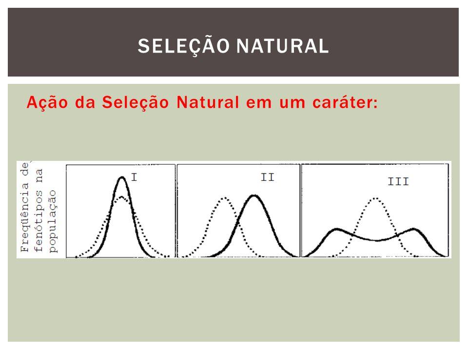 Ação da Seleção Natural em um caráter: SELEÇÃO NATURAL