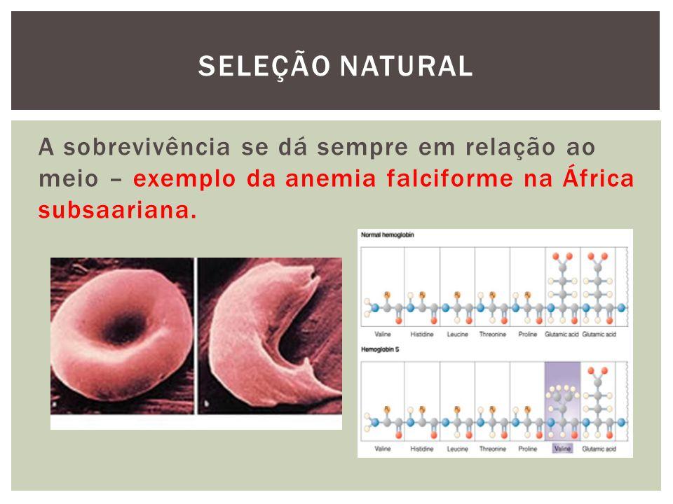A sobrevivência se dá sempre em relação ao meio – exemplo da anemia falciforme na África subsaariana. SELEÇÃO NATURAL