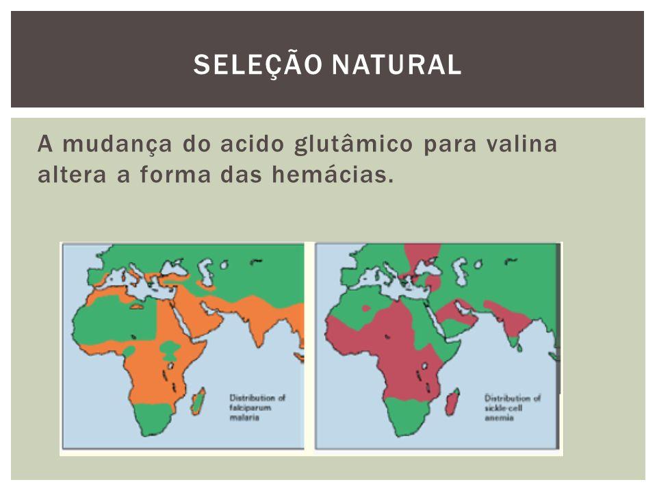 A mudança do acido glutâmico para valina altera a forma das hemácias. SELEÇÃO NATURAL