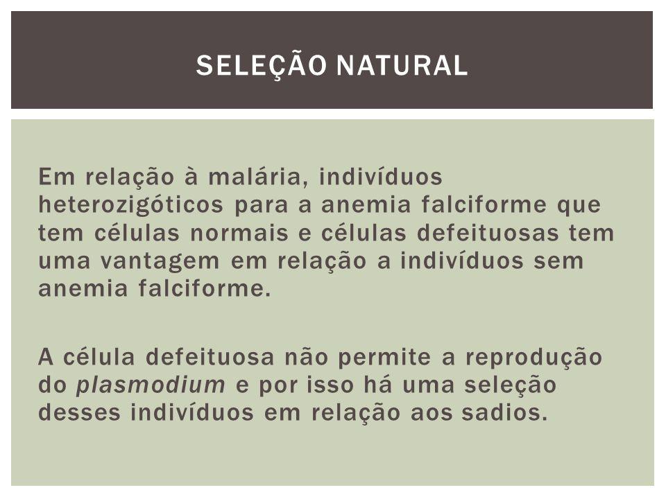 Em relação à malária, indivíduos heterozigóticos para a anemia falciforme que tem células normais e células defeituosas tem uma vantagem em relação a