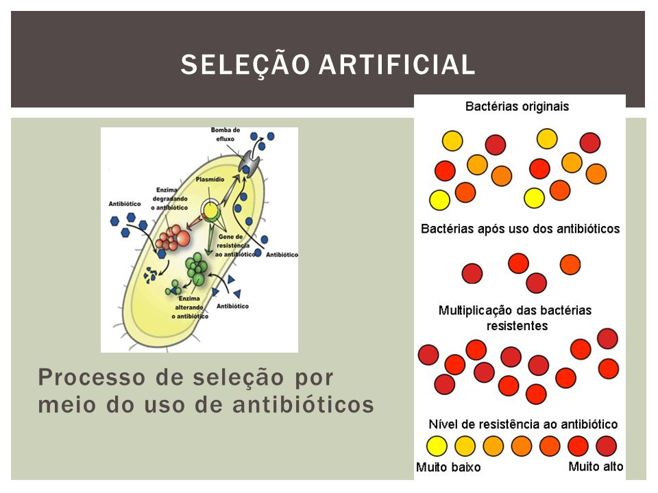 Processo de seleção por meio do uso de antibióticos SELEÇÃO ARTIFICIAL