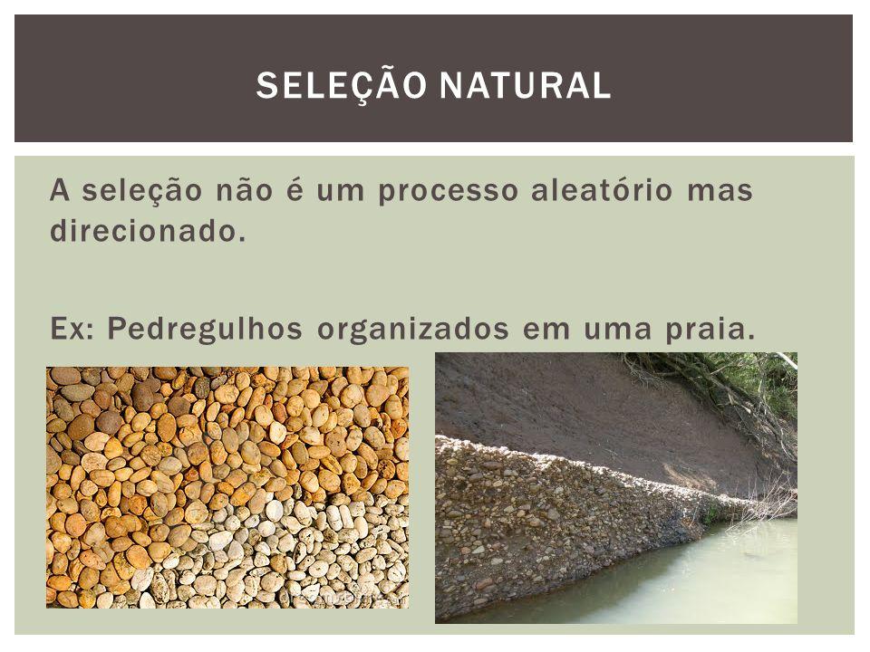 A seleção não é um processo aleatório mas direcionado. Ex: Pedregulhos organizados em uma praia. SELEÇÃO NATURAL