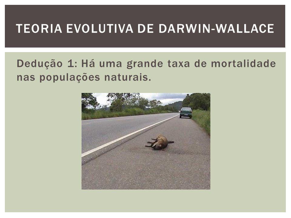 Dedução 1: Há uma grande taxa de mortalidade nas populações naturais. TEORIA EVOLUTIVA DE DARWIN-WALLACE