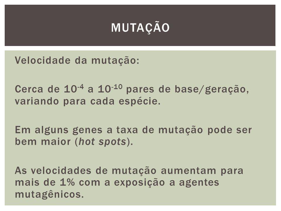 Velocidade da mutação: Cerca de 10 -4 a 10 -10 pares de base/geração, variando para cada espécie. Em alguns genes a taxa de mutação pode ser bem maior