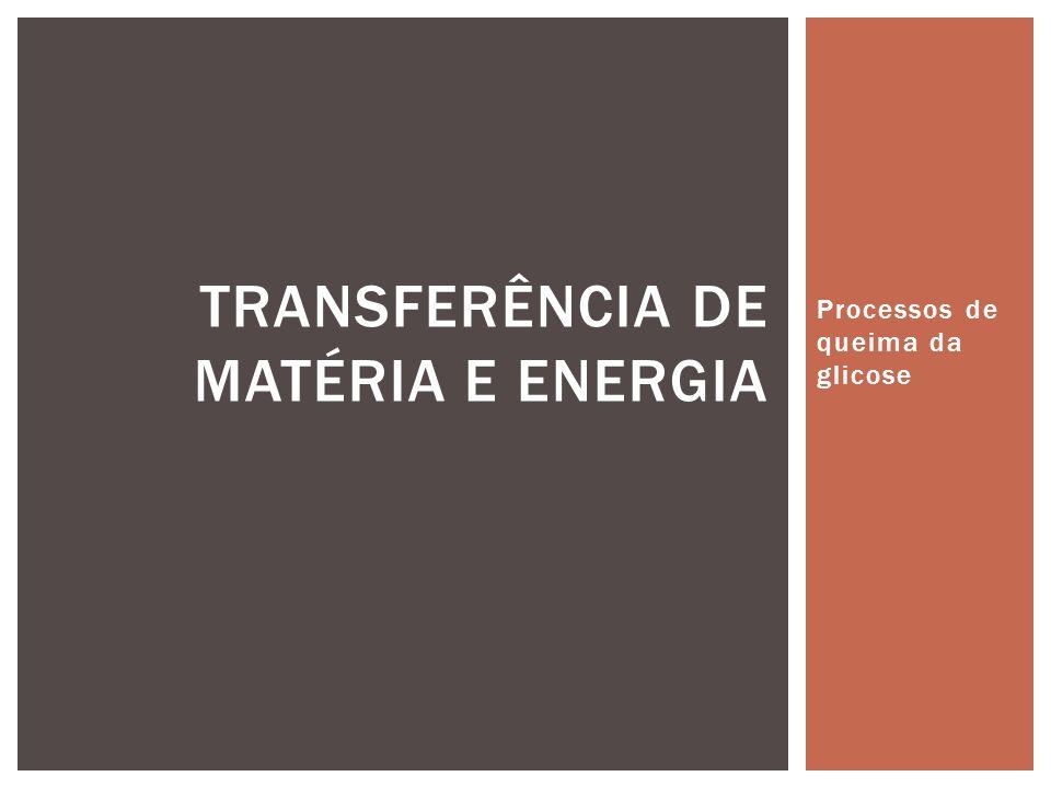 Processos de queima da glicose TRANSFERÊNCIA DE MATÉRIA E ENERGIA