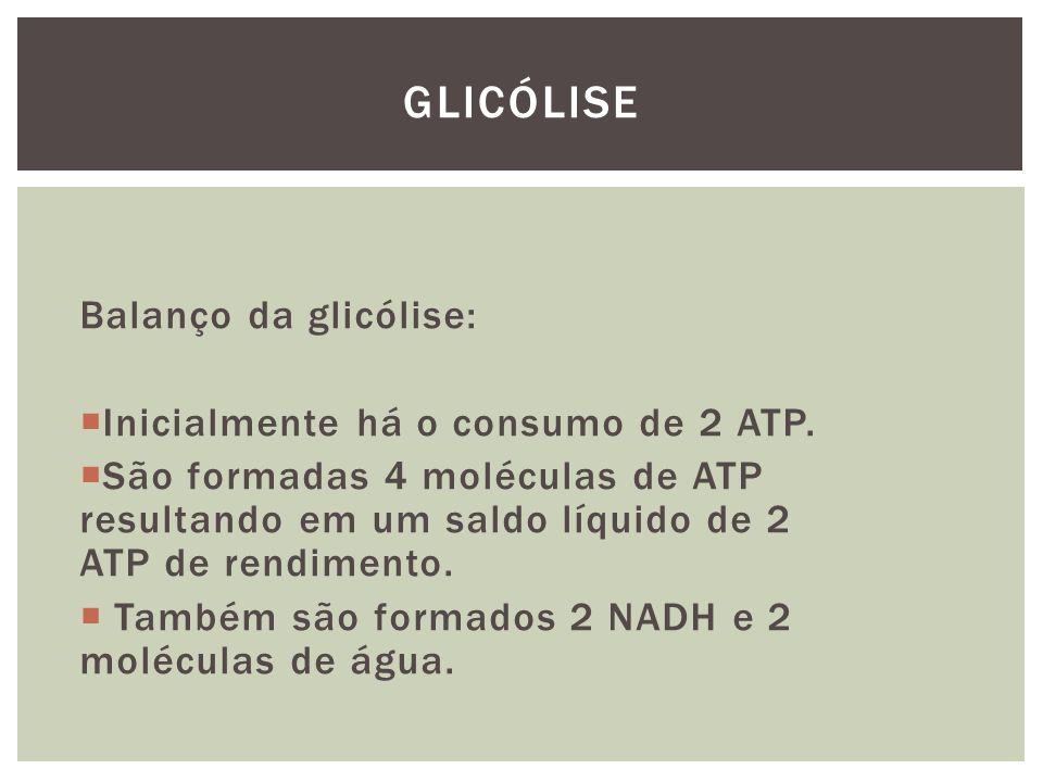 Balanço da glicólise: Inicialmente há o consumo de 2 ATP. São formadas 4 moléculas de ATP resultando em um saldo líquido de 2 ATP de rendimento. També