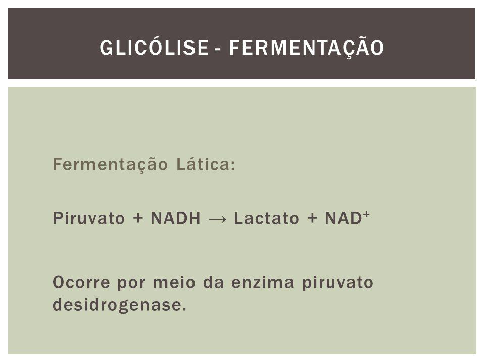 Fermentação Lática: Piruvato + NADH Lactato + NAD + Ocorre por meio da enzima piruvato desidrogenase. GLICÓLISE - FERMENTAÇÃO