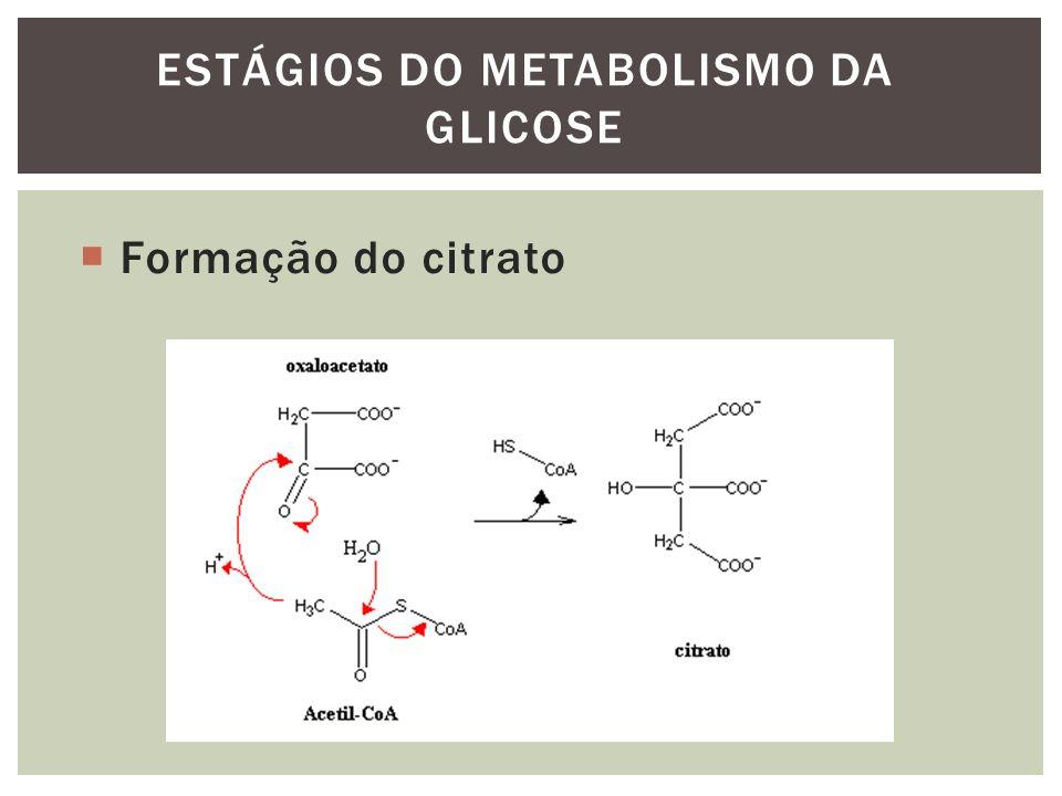 Formação do citrato ESTÁGIOS DO METABOLISMO DA GLICOSE