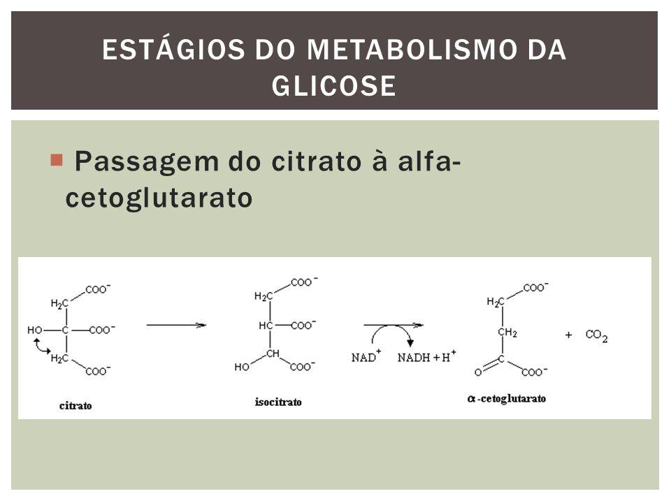 Passagem do citrato à alfa- cetoglutarato ESTÁGIOS DO METABOLISMO DA GLICOSE