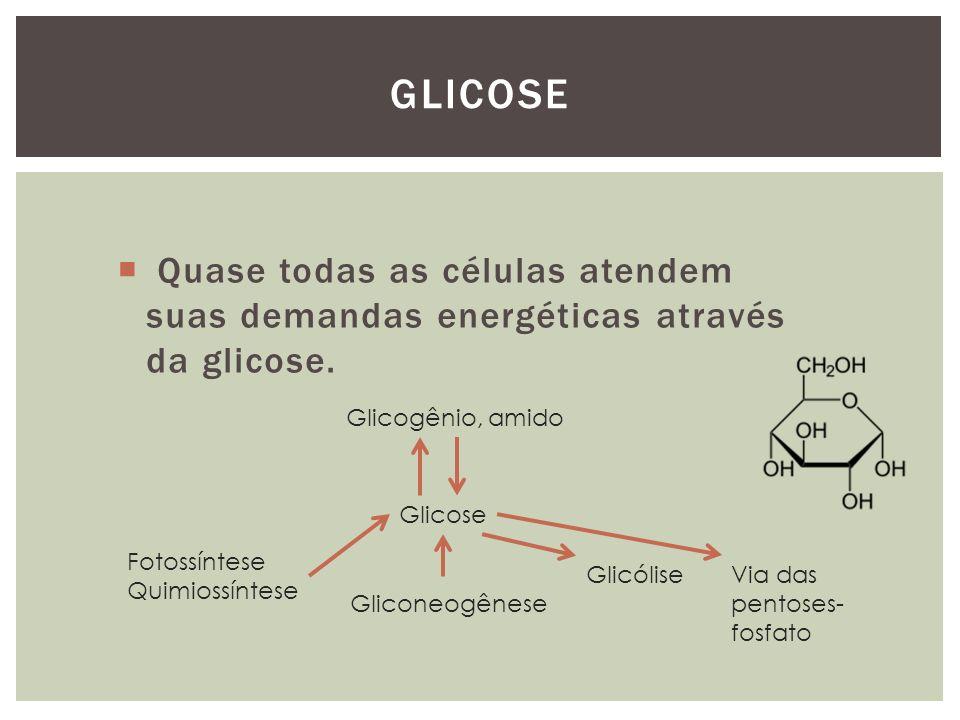 Quase todas as células atendem suas demandas energéticas através da glicose. GLICOSE Glicose Glicogênio, amido Fotossíntese Quimiossíntese Gliconeogên
