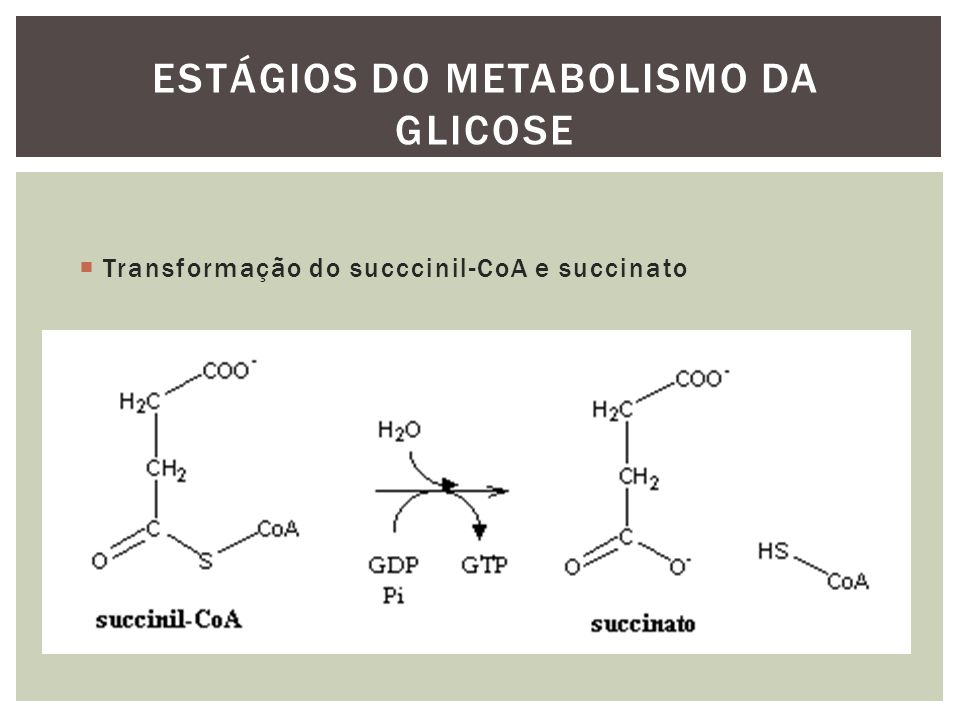 Transformação do succcinil-CoA e succinato ESTÁGIOS DO METABOLISMO DA GLICOSE