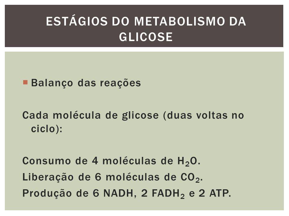 Balanço das reações Cada molécula de glicose (duas voltas no ciclo): Consumo de 4 moléculas de H 2 O. Liberação de 6 moléculas de CO 2. Produção de 6