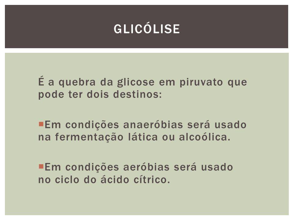 É a quebra da glicose em piruvato que pode ter dois destinos: Em condições anaeróbias será usado na fermentação lática ou alcoólica. Em condições aeró