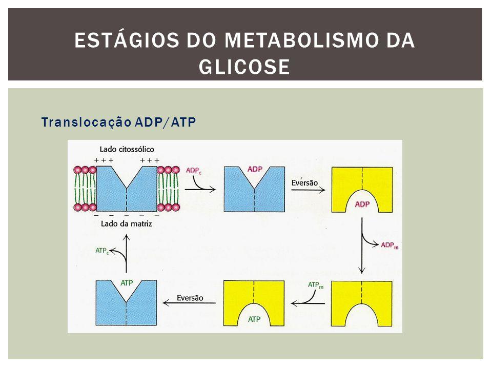 Translocação ADP/ATP ESTÁGIOS DO METABOLISMO DA GLICOSE