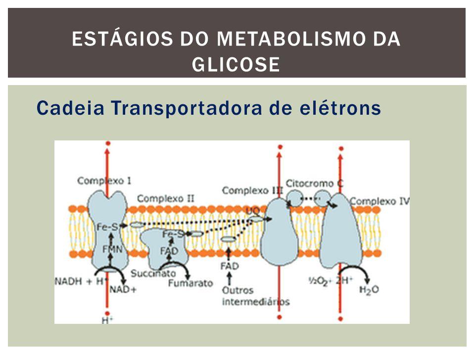 Cadeia Transportadora de elétrons ESTÁGIOS DO METABOLISMO DA GLICOSE
