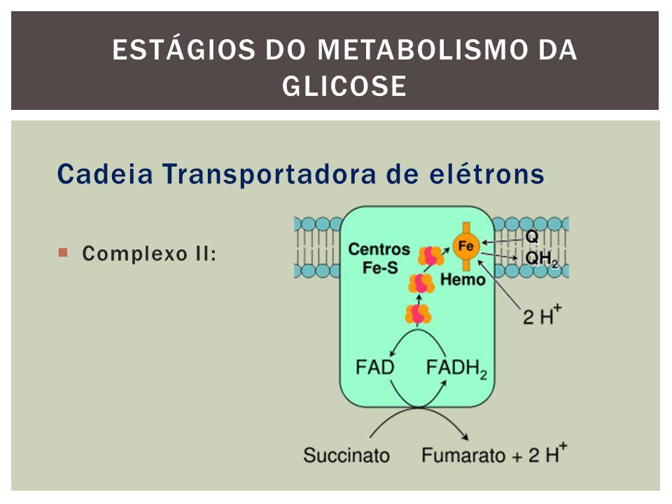 Cadeia Transportadora de elétrons Complexo II: ESTÁGIOS DO METABOLISMO DA GLICOSE