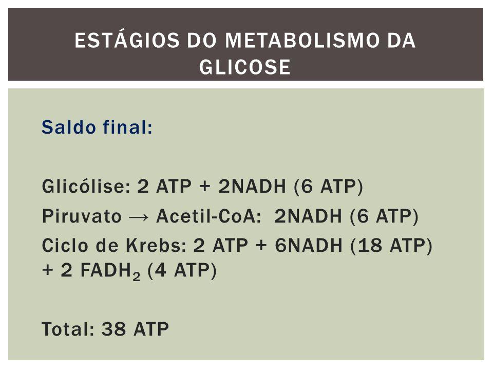 Saldo final: Glicólise: 2 ATP + 2NADH (6 ATP) Piruvato Acetil-CoA: 2NADH (6 ATP) Ciclo de Krebs: 2 ATP + 6NADH (18 ATP) + 2 FADH 2 (4 ATP) Total: 38 A