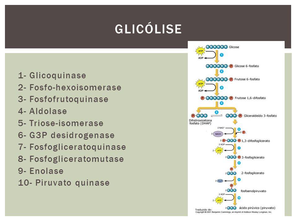 1- Glicoquinase 2- Fosfo-hexoisomerase 3- Fosfofrutoquinase 4- Aldolase 5- Triose-isomerase 6- G3P desidrogenase 7- Fosfogliceratoquinase 8- Fosfoglic