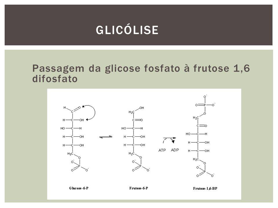 Passagem da glicose fosfato à frutose 1,6 difosfato GLICÓLISE