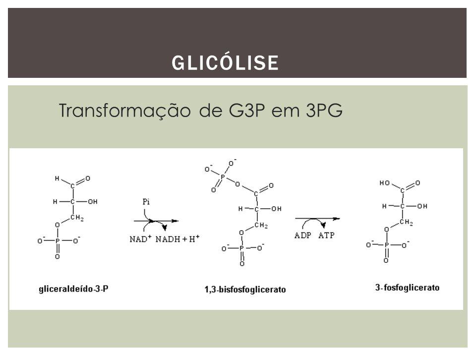GLICÓLISE Transformação de G3P em 3PG