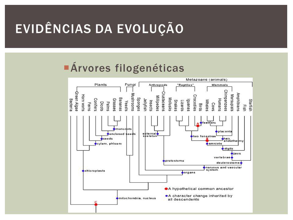 EVIDÊNCIAS DA EVOLUÇÃO Árvores filogenéticas
