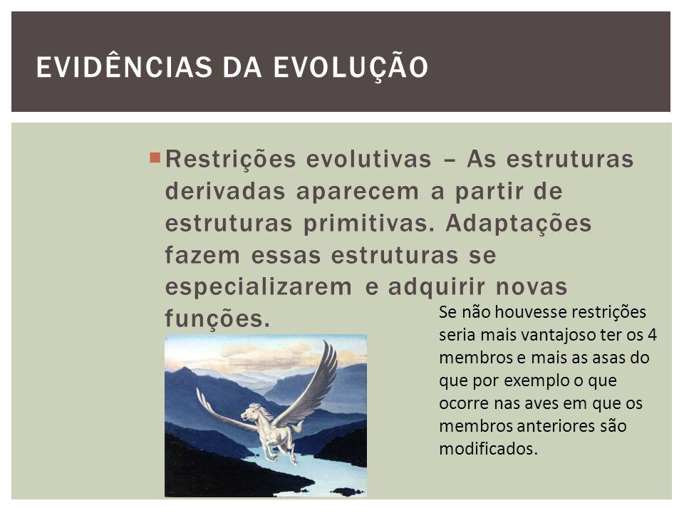 EVIDÊNCIAS DA EVOLUÇÃO Restrições evolutivas – As estruturas derivadas aparecem a partir de estruturas primitivas. Adaptações fazem essas estruturas s