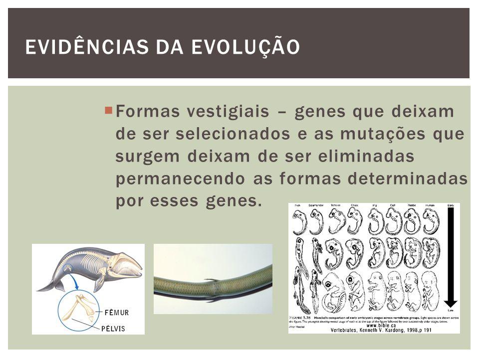 EVIDÊNCIAS DA EVOLUÇÃO Formas vestigiais – genes que deixam de ser selecionados e as mutações que surgem deixam de ser eliminadas permanecendo as form