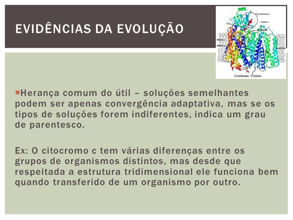 EVIDÊNCIAS DA EVOLUÇÃO Herança comum do útil – soluções semelhantes podem ser apenas convergência adaptativa, mas se os tipos de soluções forem indife