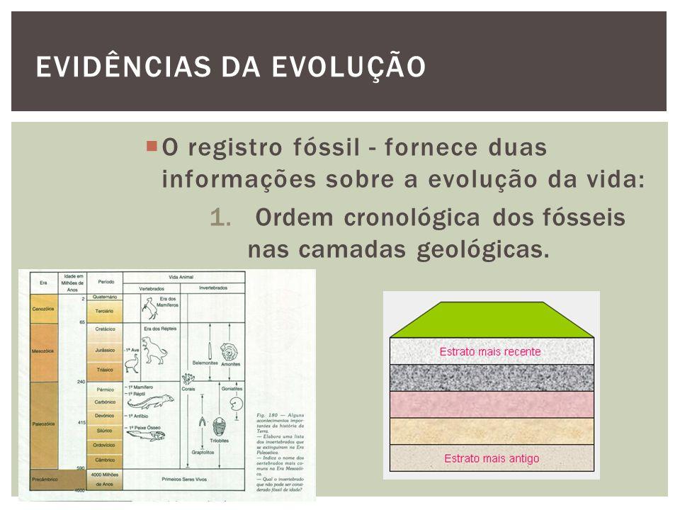 EVIDÊNCIAS DA EVOLUÇÃO O registro fóssil - fornece duas informações sobre a evolução da vida: 1. Ordem cronológica dos fósseis nas camadas geológicas.