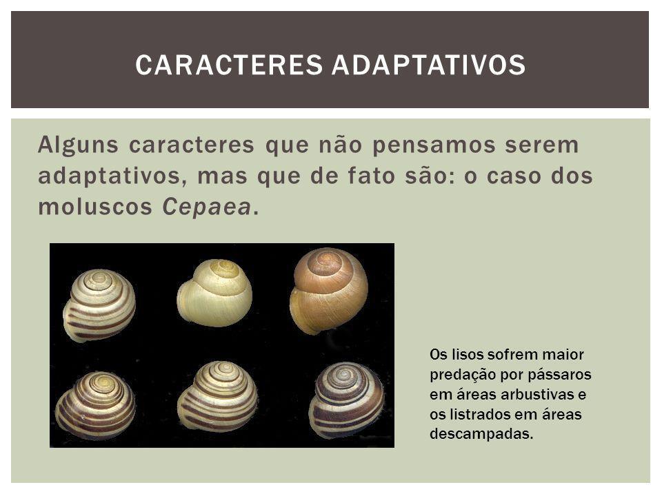 Alguns caracteres que não pensamos serem adaptativos, mas que de fato são: o caso dos moluscos Cepaea. CARACTERES ADAPTATIVOS Os lisos sofrem maior pr
