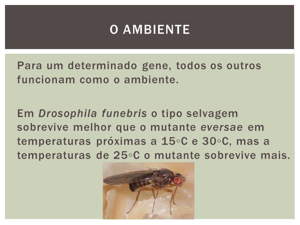 Em Drosophila funebris o mutante singed (cerdas curtas e encaracoladas) tem a mesma viabilidade que o mutante abnormes, mas quando o singed é combinado com o eversae tem uma maior viabilidade.