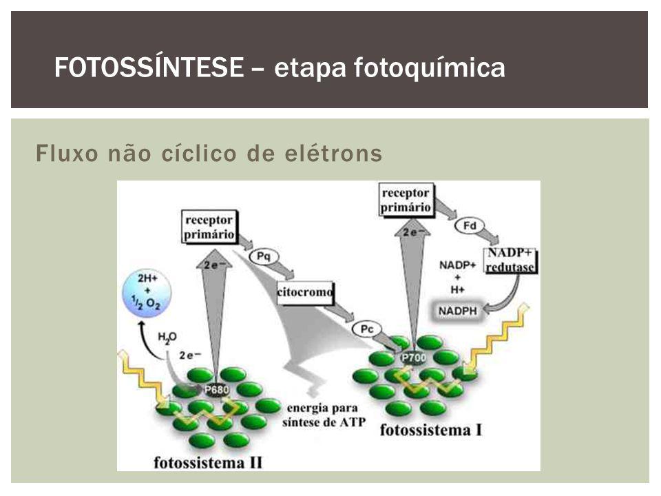 Fluxo não cíclico de elétrons FOTOSSÍNTESE – etapa fotoquímica