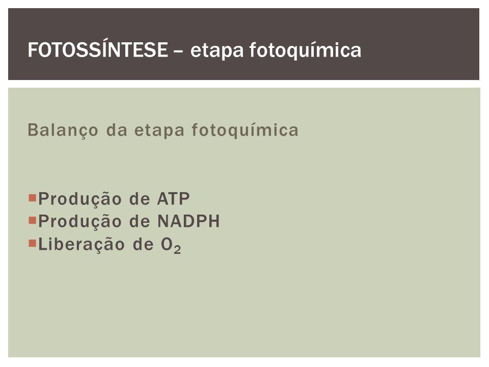 Balanço da etapa fotoquímica Produção de ATP Produção de NADPH Liberação de O 2 FOTOSSÍNTESE – etapa fotoquímica