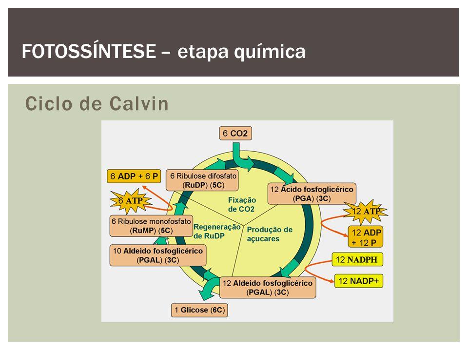 Ciclo de Calvin FOTOSSÍNTESE – etapa química